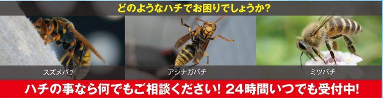 スズメバチ種類