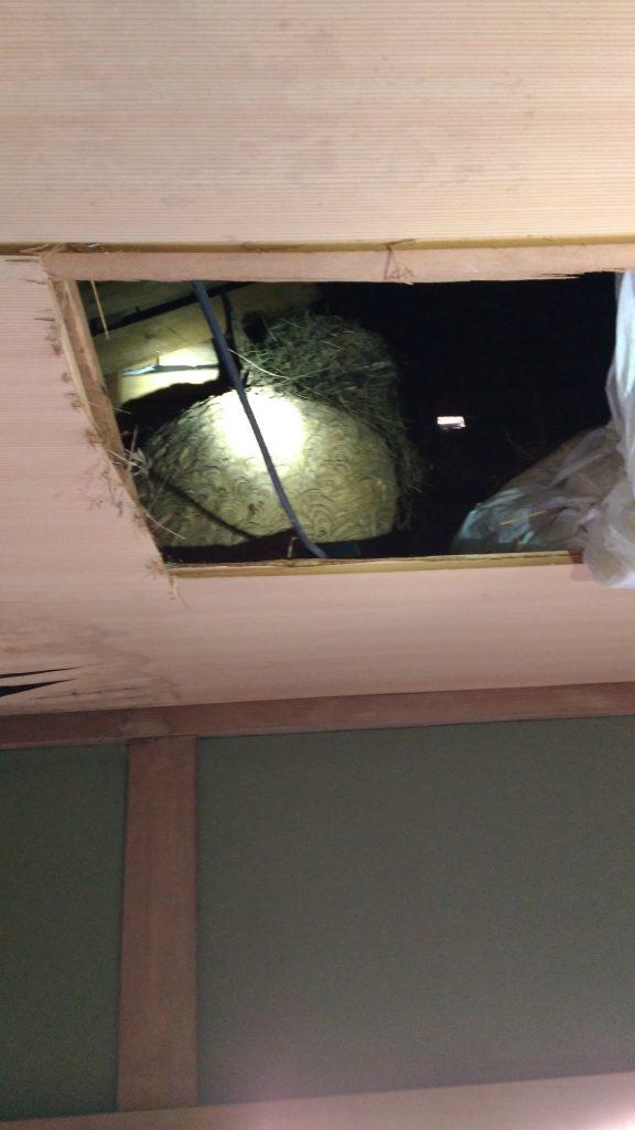 屋根の開口